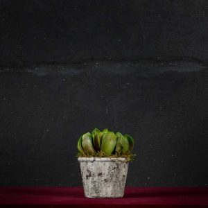 Echeveria Rosa - Fiori finti e artificiali di qualità