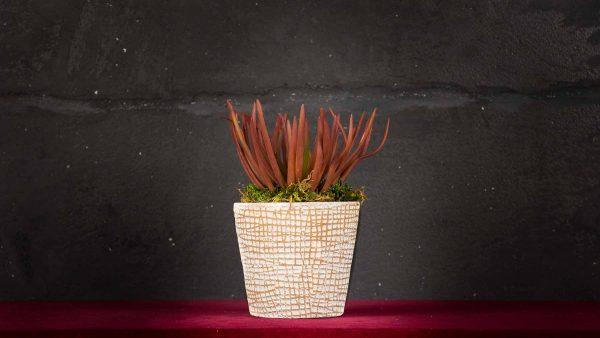 Senecio Rosso - Fiori finti e artificiali di qualità