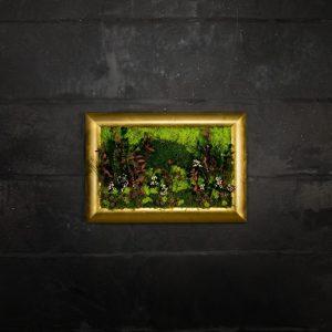 Quadro vegetale stabilizzato Acacia
