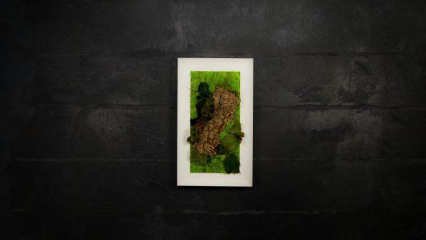 Quadro vegetale stabilizzato Hosta